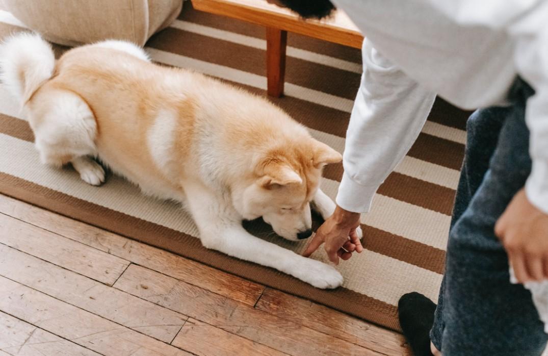 Was tun, wenn der Hund krank ist? – Purinarmes Hundefutter verabreichen und Wohlbefinden steigern